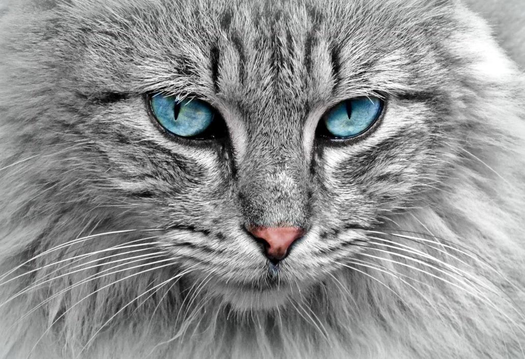 O meu gato: segredos para uma dieta saudável